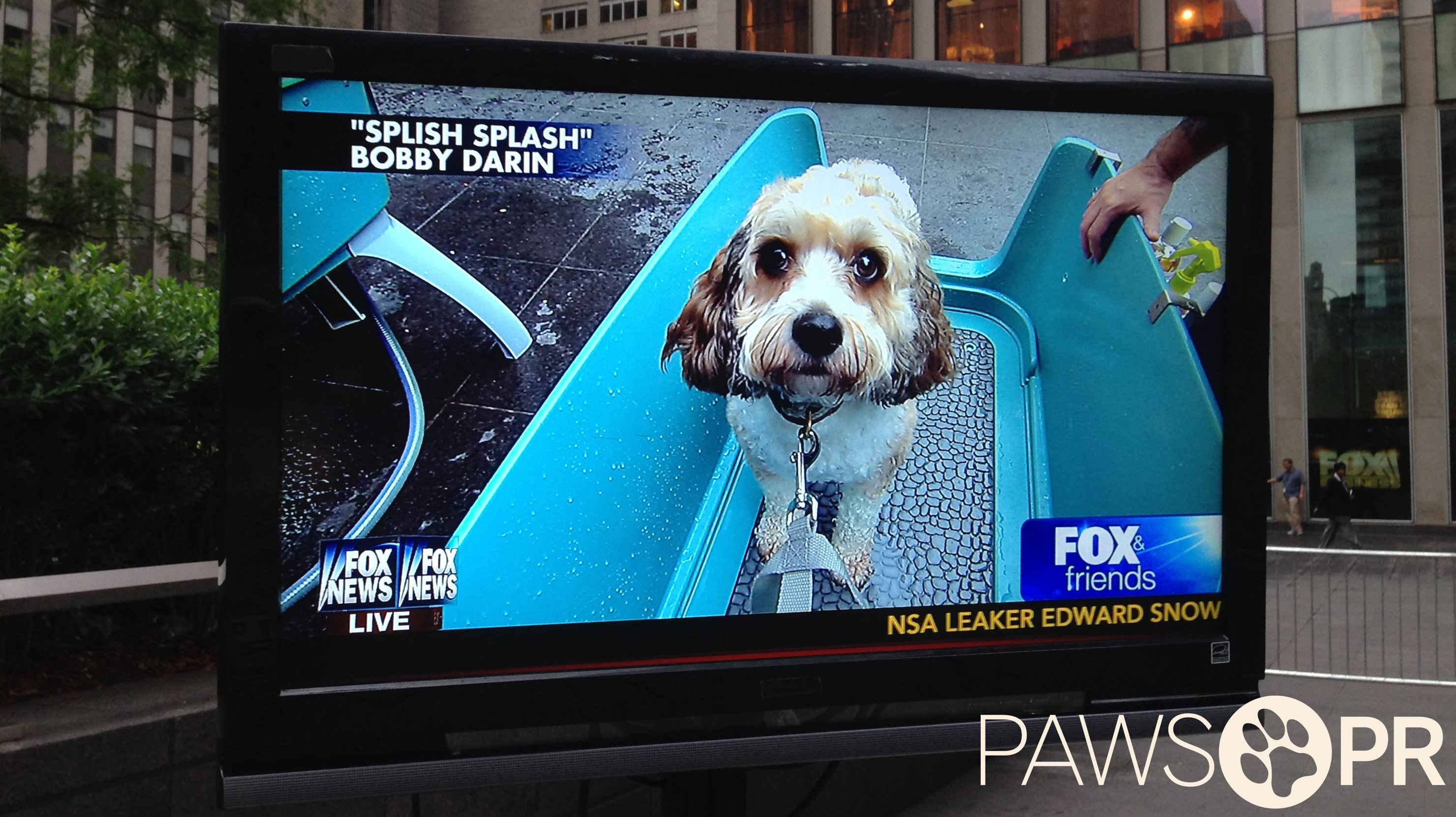 Dogtopia's appearance on Fox & Friends for their Dog Wash-a-thon to benefit US Troops (July 2013).