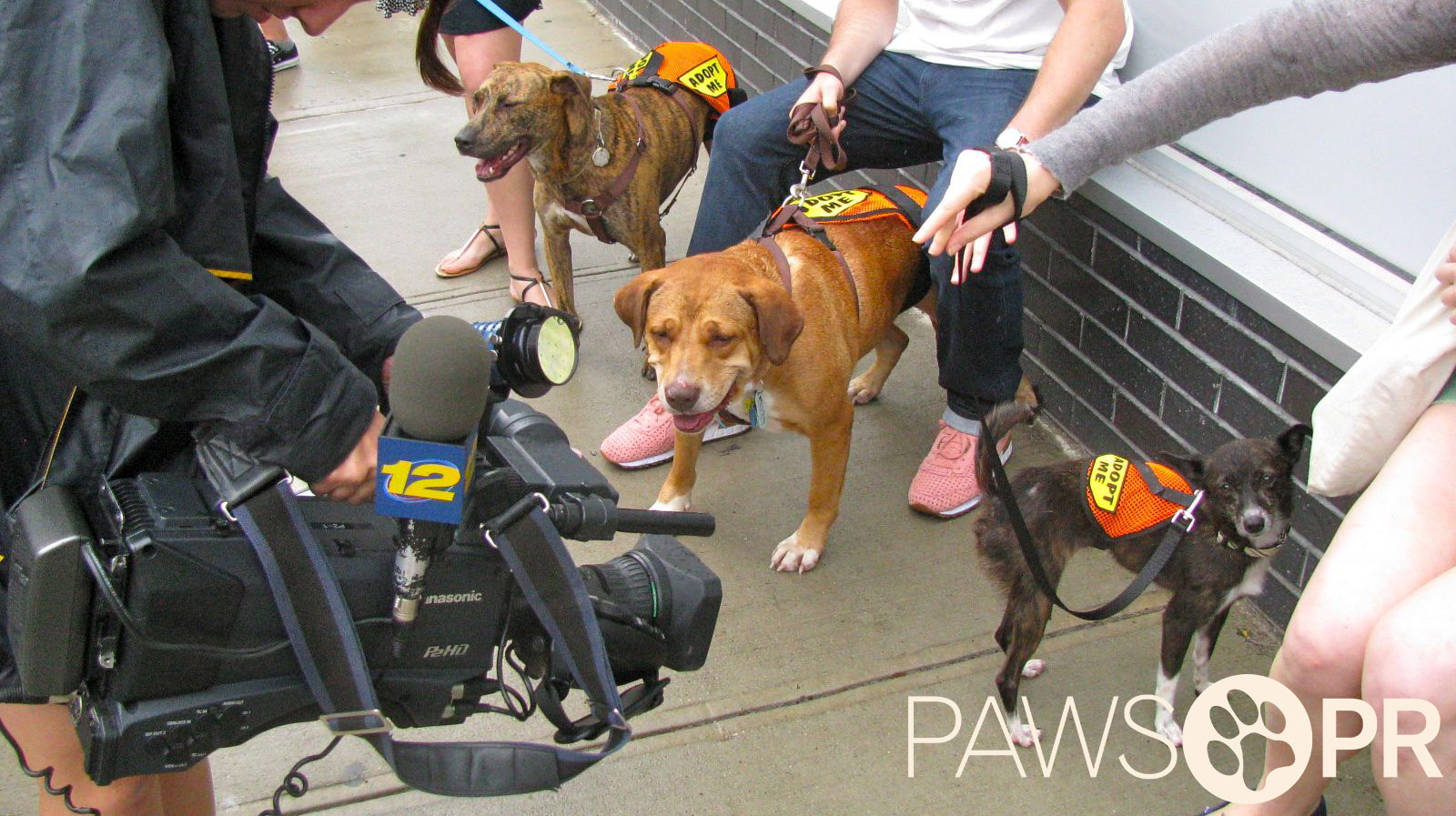 Secured media coverage for Project Blue Collar and rescue dogs (January 12, 2012).