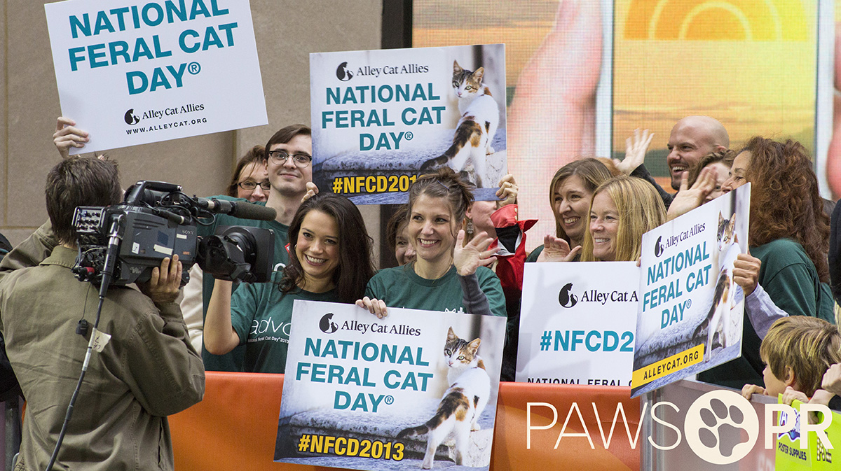 Alley Cat Allies appearance on The Today Show for National Feral Cat Day (October 16, 2013).