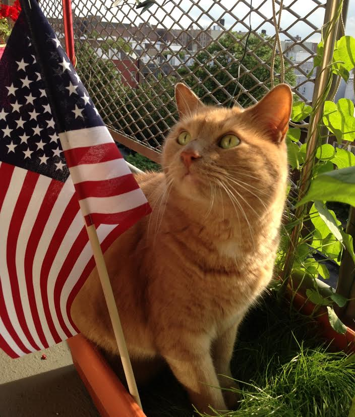 Chuck is excited for the 4th of July!