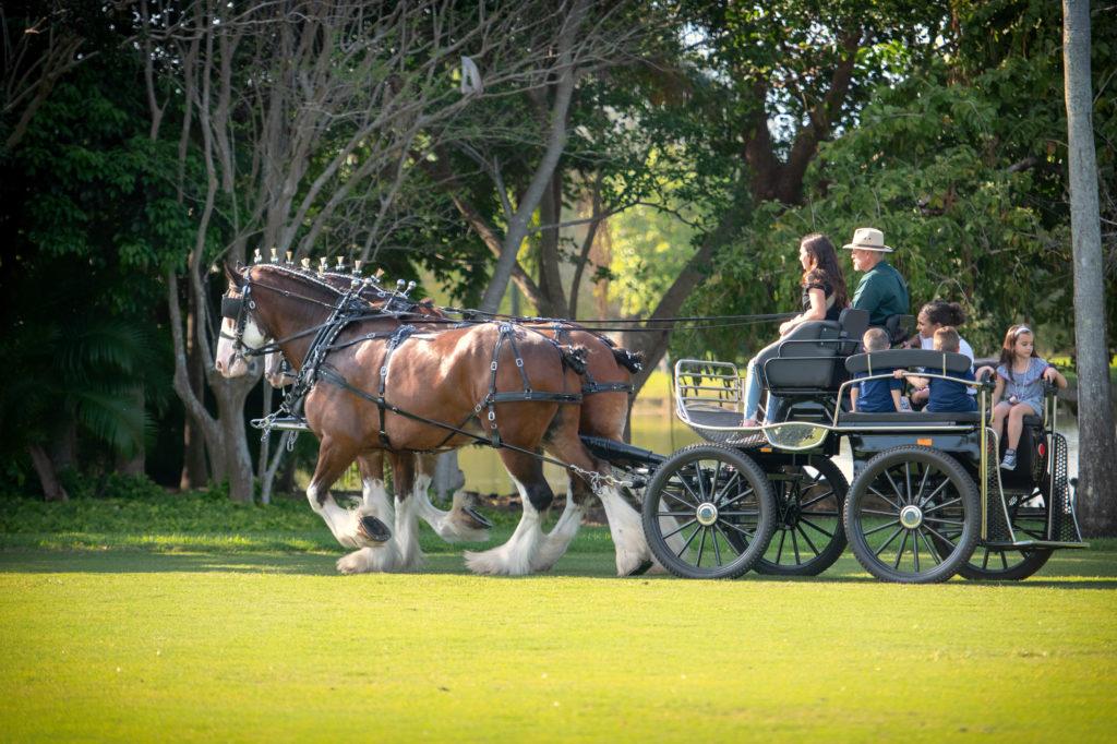 Victoria McCullough's Clysedale Horses