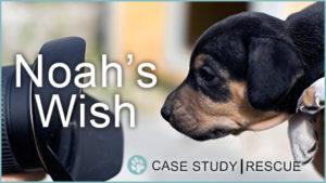 Case Study: Noah's Wish