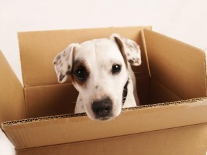 Dog-in-box-300x225