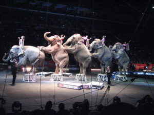 Elephants Ringling Brothers Circus