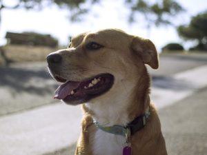 dog-598193_640