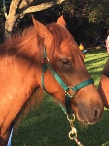 Adopt-A-Horse-Event