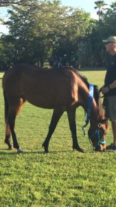 Adopt-A-Horse-Eqqus-Foundation