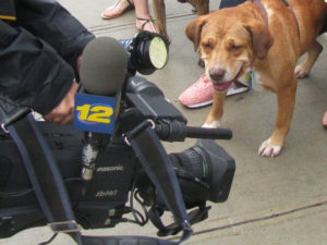 Public relations for pet companies and animal welfare organizations