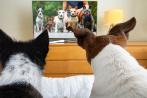 dogs-watch-tv
